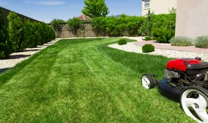 lawn care landscaping weed control