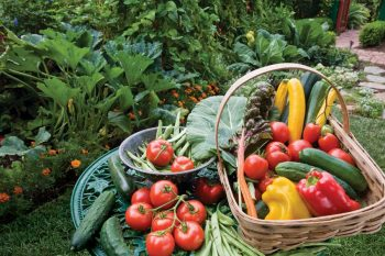 vegetable garden basket of vegetables