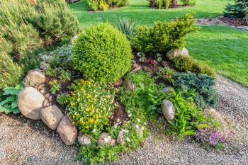 rock garden with shrubs